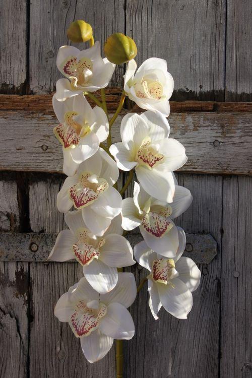 Storczyk Cymbidium Gumowany Kremowy Ekskluzywny Kwiat Sztucznyozdobadekoracja
